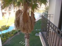 Excellent Location Penthouse Apartment pic 6